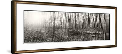 Forest, Pocono Mountains, Pennsylvania, USA--Framed Photographic Print