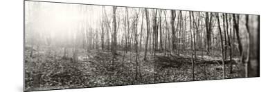 Forest, Pocono Mountains, Pennsylvania, USA--Mounted Photographic Print