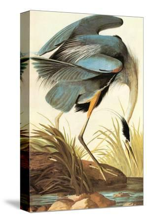 Great Blue Heron-John James Audubon-Stretched Canvas Print