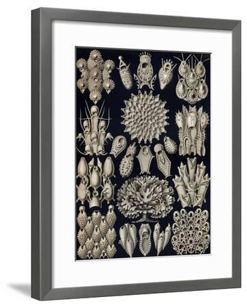 Moss Animals-Ernst Haeckel-Framed Art Print