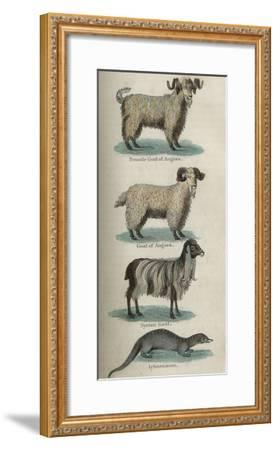 Animals--Framed Art Print