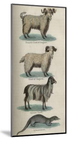 Animals--Mounted Art Print