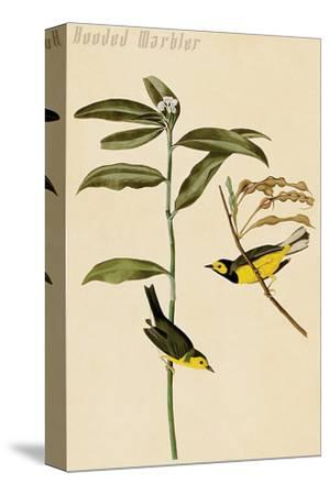 Hooded Warbler-John James Audubon-Stretched Canvas Print