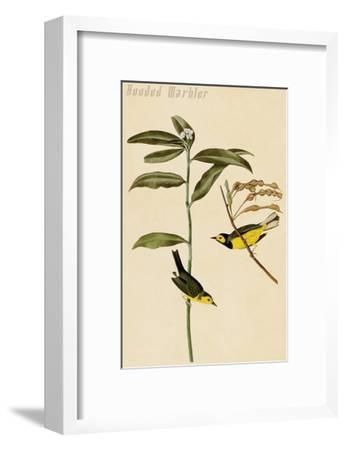 Hooded Warbler-John James Audubon-Framed Art Print