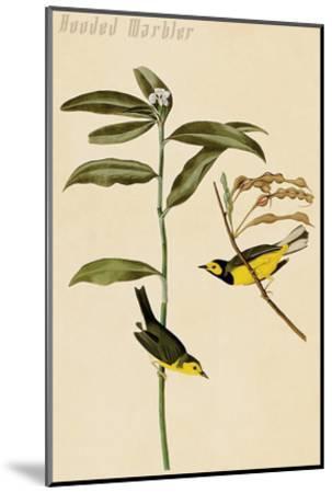 Hooded Warbler-John James Audubon-Mounted Art Print