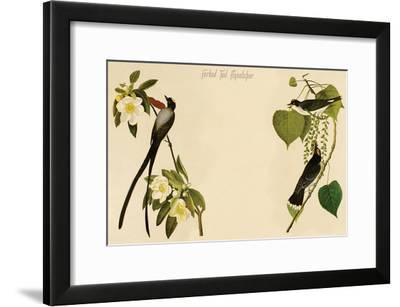 Forked Tail Flycatcher-John James Audubon-Framed Art Print