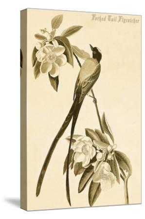 Forked Tail Flycatcher-John James Audubon-Stretched Canvas Print