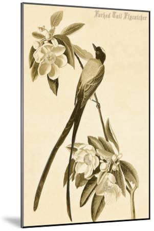 Forked Tail Flycatcher-John James Audubon-Mounted Art Print