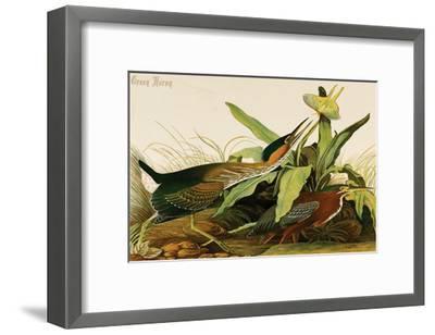 Green Heron-John James Audubon-Framed Art Print