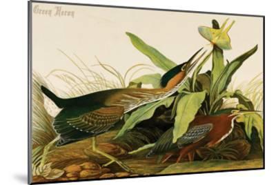 Green Heron-John James Audubon-Mounted Art Print