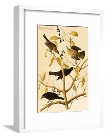 Rusty Grackle-John James Audubon-Framed Art Print