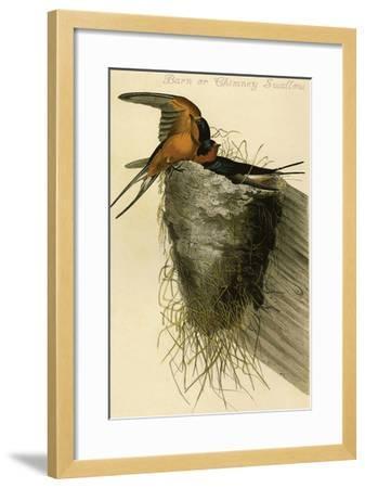 Barn or Chimney Swallow-John James Audubon-Framed Art Print