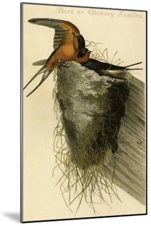 Barn or Chimney Swallow-John James Audubon-Mounted Art Print