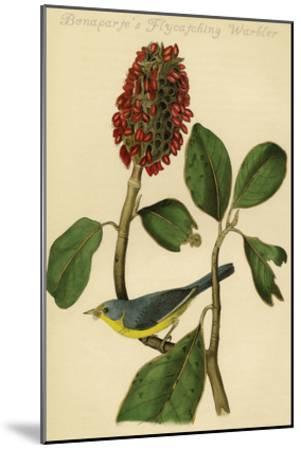 Bonaparte's Flycatching Warbler-John James Audubon-Mounted Art Print