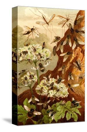 Bees-F^W^ Kuhnert-Stretched Canvas Print