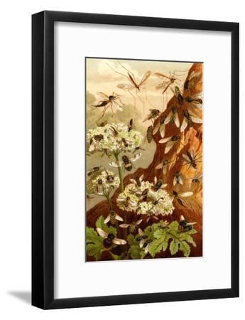 Bees-F^W^ Kuhnert-Framed Art Print