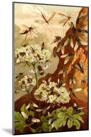 Bees-F^W^ Kuhnert-Mounted Art Print