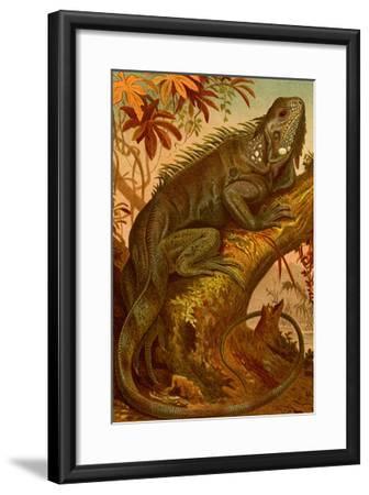 Iguana-F^W^ Kuhnert-Framed Art Print