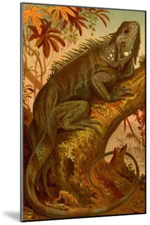 Iguana-F^W^ Kuhnert-Mounted Art Print