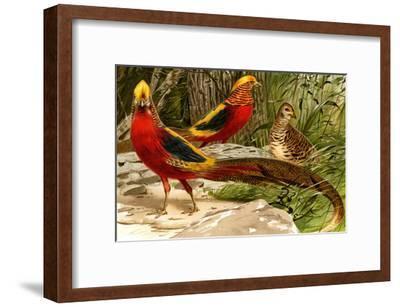 Pheasants-F^W^ Kuhnert-Framed Art Print