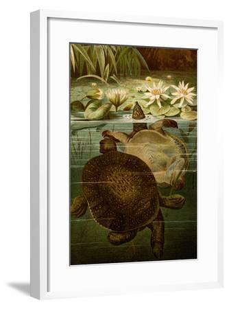 Turtles-F^W^ Kuhnert-Framed Art Print