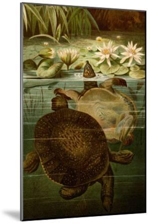 Turtles-F^W^ Kuhnert-Mounted Art Print