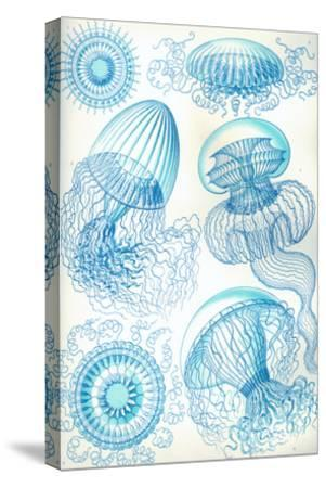 Jelly Fish-Ernst Haeckel-Stretched Canvas Print