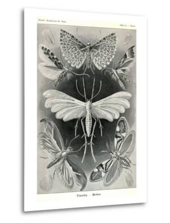 Moths -Tineida-Ernst Haeckel-Metal Print