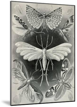 Moths -Tineida-Ernst Haeckel-Mounted Art Print