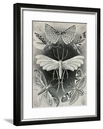 Moths -Tineida-Ernst Haeckel-Framed Art Print