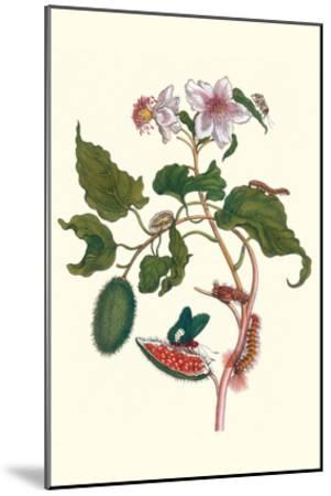 Urucu Tree a Phidias Firetip Butterfly-Maria Sibylla Merian-Mounted Art Print