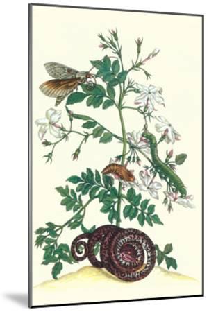Royal Jasmine with an Amazon Tree Boa and an Ello Sphinx Moth-Maria Sibylla Merian-Mounted Art Print