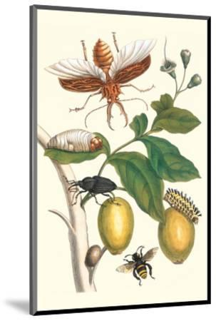 Genip Tree with Palm Weevil, a Long Horned Beetle and an Orchid Bee-Maria Sibylla Merian-Mounted Premium Giclee Print