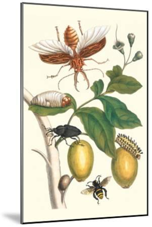 Genip Tree with Palm Weevil, a Long Horned Beetle and an Orchid Bee-Maria Sibylla Merian-Mounted Art Print