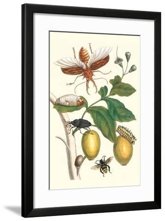 Genip Tree with Palm Weevil, a Long Horned Beetle and an Orchid Bee-Maria Sibylla Merian-Framed Art Print