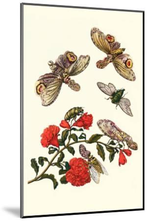 Sundown Cicada and a Peanut-Headed Lantern Fly-Maria Sibylla Merian-Mounted Art Print