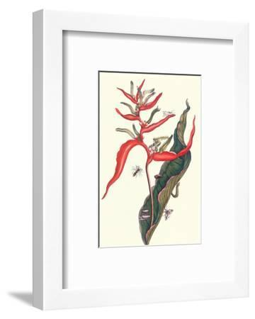 Heliconia and Potter Wasp-Maria Sibylla Merian-Framed Premium Giclee Print