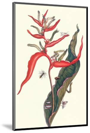 Heliconia and Potter Wasp-Maria Sibylla Merian-Mounted Premium Giclee Print