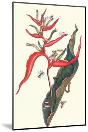 Heliconia and Potter Wasp-Maria Sibylla Merian-Mounted Art Print