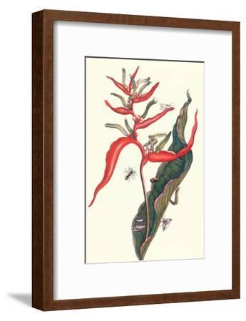 Heliconia and Potter Wasp-Maria Sibylla Merian-Framed Art Print