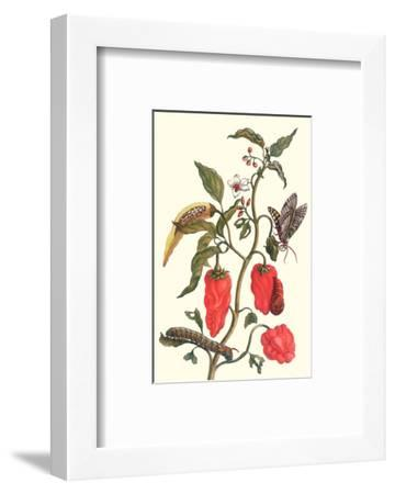 Cherry Pepper and Tobacco Hornworm with Five Spotted Hawkmoth-Maria Sibylla Merian-Framed Premium Giclee Print