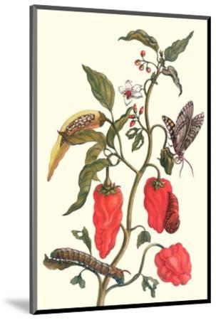 Cherry Pepper and Tobacco Hornworm with Five Spotted Hawkmoth-Maria Sibylla Merian-Mounted Premium Giclee Print