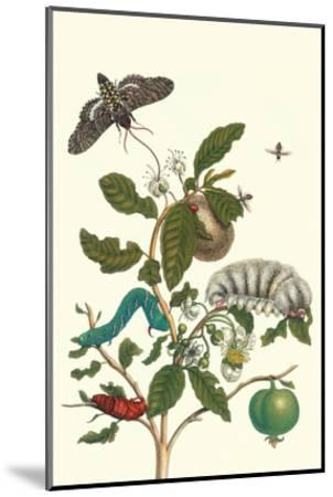 Guava and Tobacco Hornworm and a Podalia Moth-Maria Sibylla Merian-Mounted Art Print