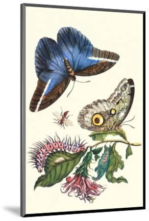 Cardinal's Guard Butterfly with Idomeneus Giant Owl Butterfly-Maria Sibylla Merian-Mounted Premium Giclee Print