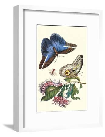 Cardinal's Guard Butterfly with Idomeneus Giant Owl Butterfly-Maria Sibylla Merian-Framed Art Print