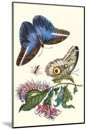 Cardinal's Guard Butterfly with Idomeneus Giant Owl Butterfly-Maria Sibylla Merian-Mounted Art Print