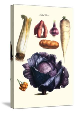 Vegetables; Cabbage, Celery, Yam, Potato, Onion, Tomato, Horse Raddish-Philippe-Victoire Leveque de Vilmorin-Stretched Canvas Print