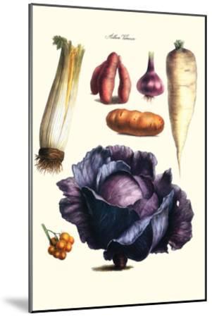 Vegetables; Cabbage, Celery, Yam, Potato, Onion, Tomato, Horse Raddish-Philippe-Victoire Leveque de Vilmorin-Mounted Art Print