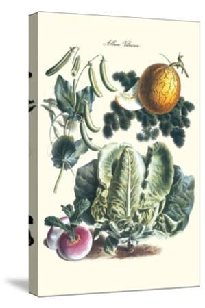 Vegetables; Melon, Lettuce, Green Beans, and Turnips-Philippe-Victoire Leveque de Vilmorin-Stretched Canvas Print