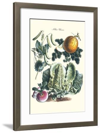 Vegetables; Melon, Lettuce, Green Beans, and Turnips-Philippe-Victoire Leveque de Vilmorin-Framed Art Print